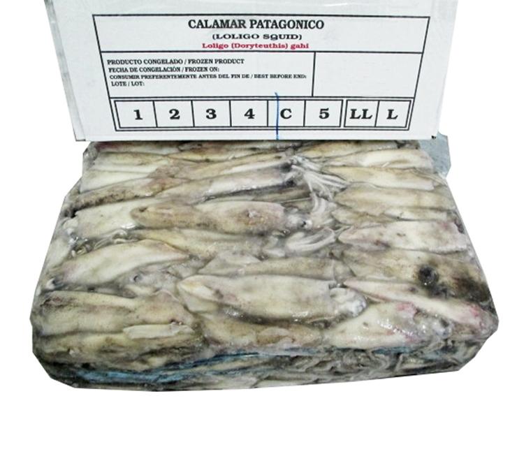 CALAMAR PATAGÓNICO C 10 KG