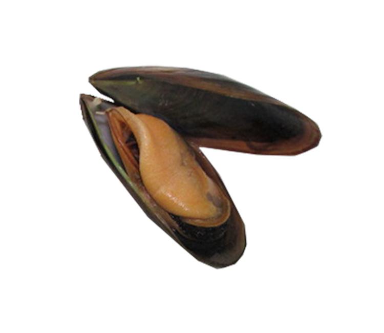 Mejillon Gallego Doble concha cocido 80/100 3 kg